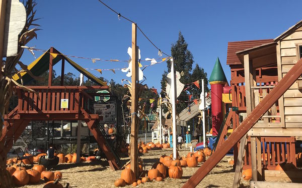 Lazy Day: A Pumpkin Patch for Tired Parents